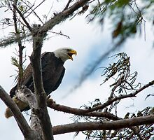 Voice of the Eagle by Bonnie T.  Barry