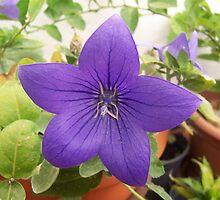 Twinkle Twinkle Purple Star by justbyjulie