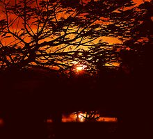 REDCOLOR - AFRICAN SUNSET by Scott  d'Almeida