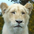 White Lion Cub by LisaRoberts