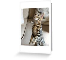 Meer cat? Greeting Card