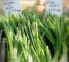 Farmers Market Green Onions by LenaHunt