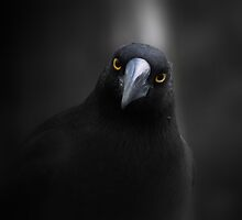 Currawong Gothica  by cullodenmist