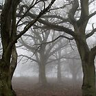 Trees in fog by Dan Norcott