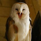 Barn Owl by RCrabb
