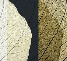 The leaf:composition1 by dominiquelandau