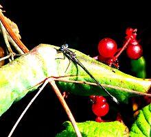 Spreadwing Damselfly on a Red Berry Bush by Chuck Gardner