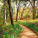 Enchanted Path by Bonnie T.  Barry