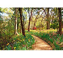Enchanted Path Photographic Print