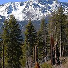 Tallac in Springtime by Jared Manninen