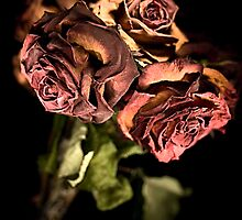 Still Beautiful (Dead Roses) by melmoth