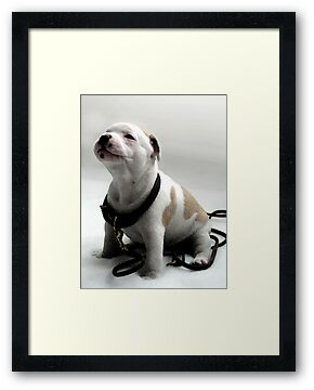 Staffordshire Bull Terrier Puppy, Watercolor Style Art Print by ArtPrints