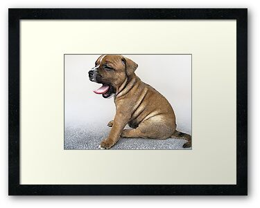 Staffordshire Bull Terrier Puppy Dog, Modern Art Print by ArtPrints