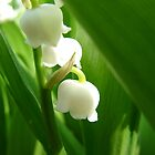 Lily of the Valley by Jessie Scott