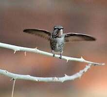 About to Take Off by Kathleen Brant