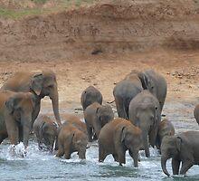watering place, Sri-Lanka by KaterinaSam