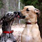French Kiss  by Lolabud
