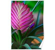 Bromeliad Art Poster