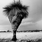 Australian Grass Tree by Adrianne Yzerman