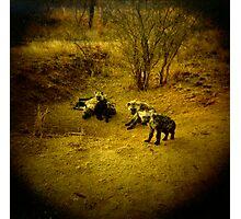Baby Hyenas Photographic Print