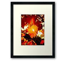 Ray of Sun Through Stunning Fall Foliage  Framed Print