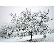 Winter Wonderland Photographic Print