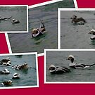 Sea Ducks ~ Oldsquaw by Larry Llewellyn