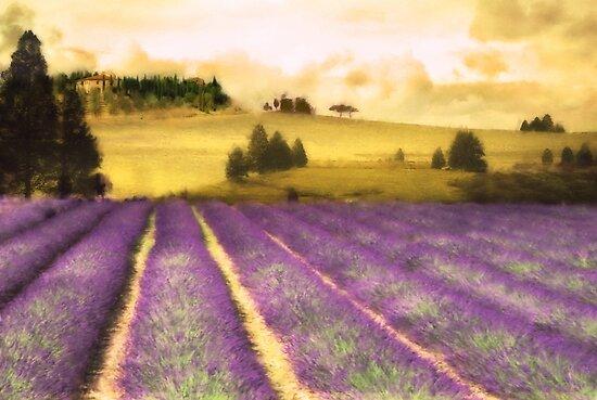 Toscana by John Edwards