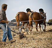 Pushing The Plough by Tony Golding