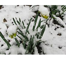 and who said it was spring then .................. Photographic Print