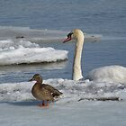 Ice Buddies by deb cole