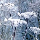 Snowy Flower Heads by Edward Denyer