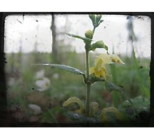 Yellow petals Photographic Print