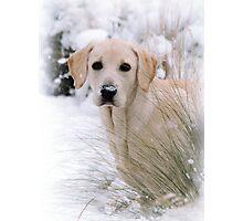 Snow Daisy Photographic Print