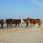 Horses Watching The Ocean by Jesse Simmers