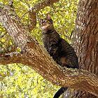 Tabby Cats by Nicole I Hamilton