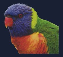 Rainbow Lorikeet by Melva Vivian