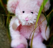An Adventurous Teddy by Evita
