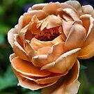 Peach Blossom by Jamie Lee