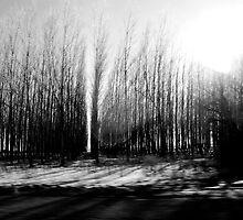 Tree Farm by JVBurnett