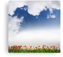 Spring tulips and cloudscape view Canvas Print