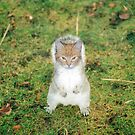 Squirrelcat by Nathan Walker