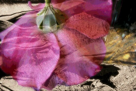 Textured Rose by Donna Adamski