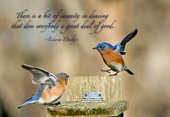 Dancing Bluebirds by Bonnie T.  Barry