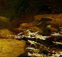Sub-marine Fishing by Michael Wolf