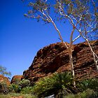 Cycads at Kings Canyon by Bart The Photographer