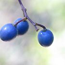 Three Blue Berries by Marilyn Harris