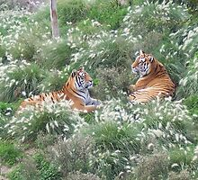 Tigers In The Grass by justbyjulie