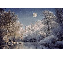 Silver Forest Photographic Print