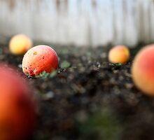 Fallen Peaches by tevamana